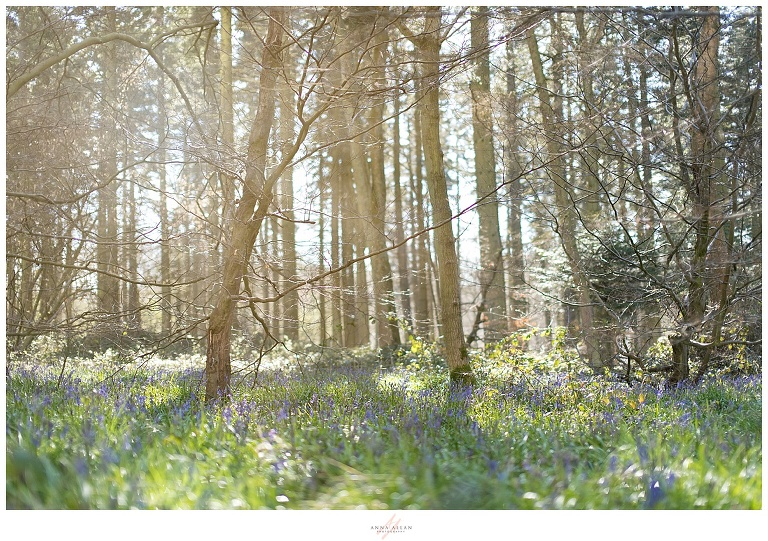 Bluebell Photo Session at Wendover Woods